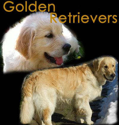 Vai al sito Golden Retrievers